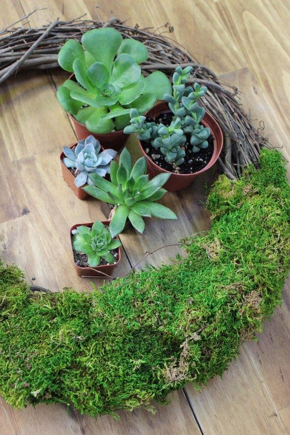 succulent wreath 4